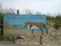 Assateague State Park, MD