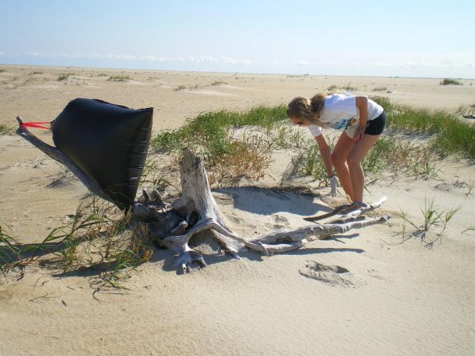 Gabrielle nettoie le National Seashore