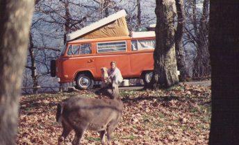 Bonnie et les cerfs de Virginie, Skyline Drive, VA