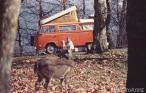 Bonnie et les cerfs de Virginie, VA