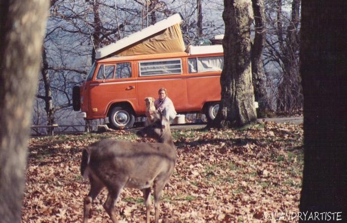 Bonnie et les cerfs de Virginie