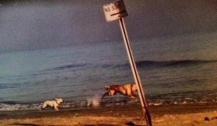 Bonnie et la P'tite à la plage, TX