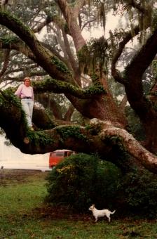 Chêne âgé de 350 ans, Jekyll Island, GA